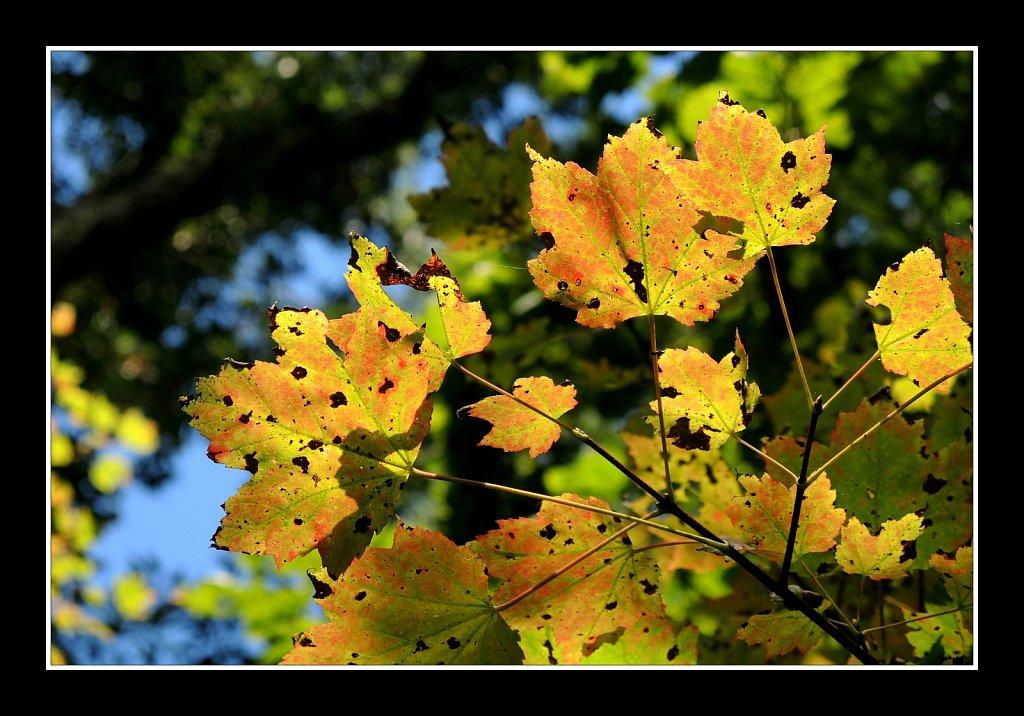 Fall - It's Around the Cornor