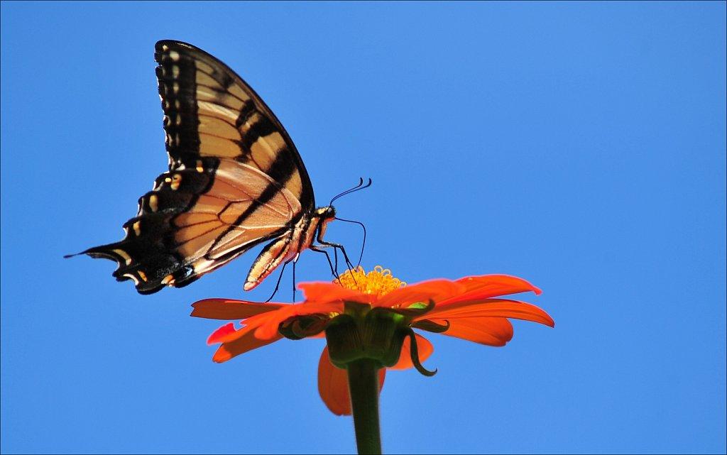 Butterflies at Work