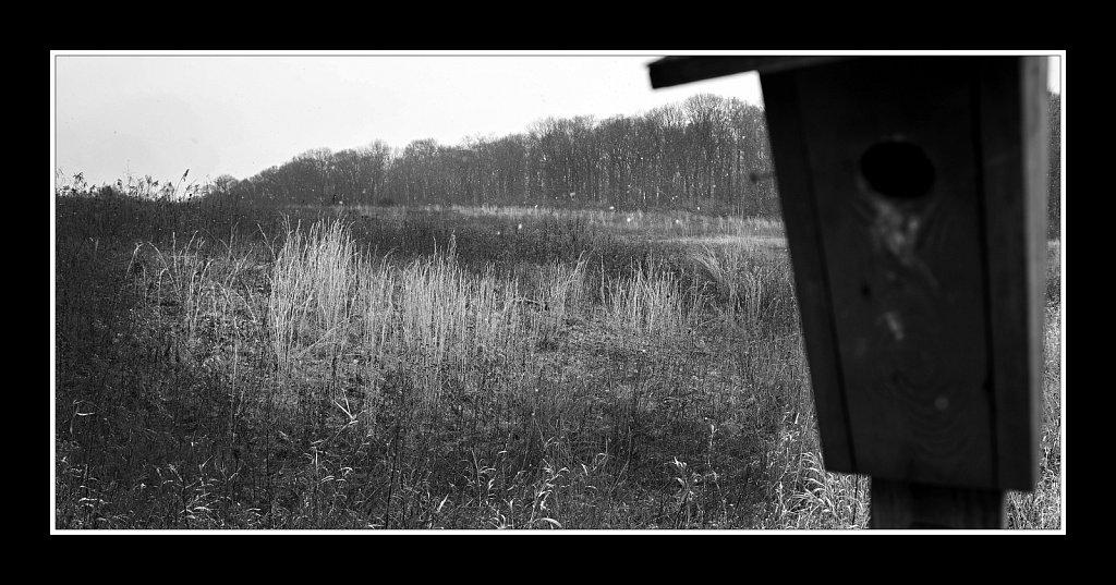 Mountain Farm Pond