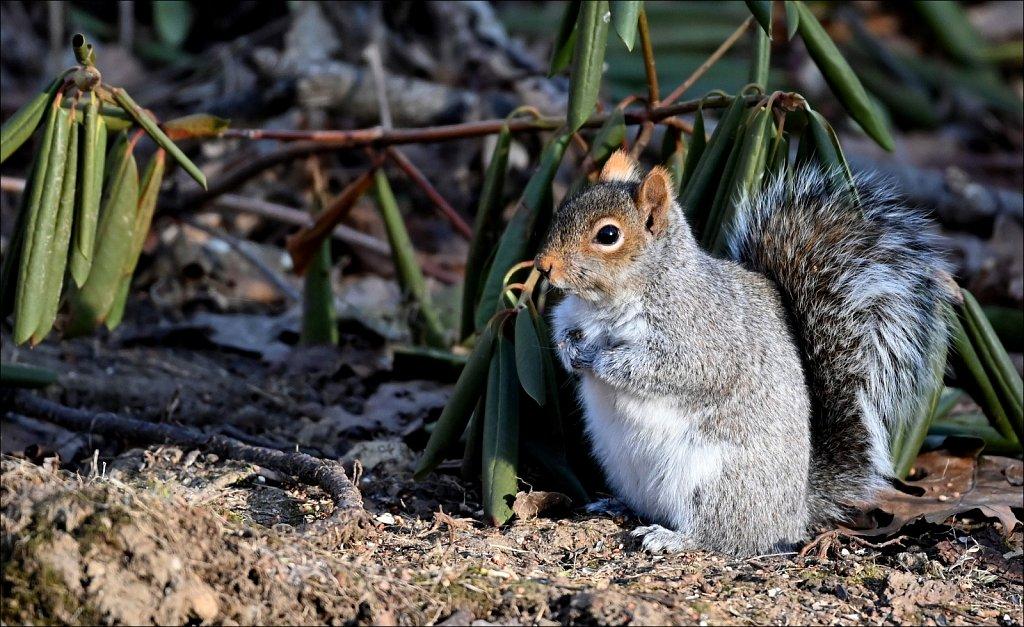 Mammals of New Jersey